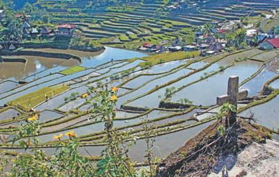 Филиппины Рисовые террасы возле Банауэ (Филиппины)