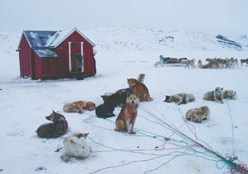 Гренландия, зимовье в Гренландии