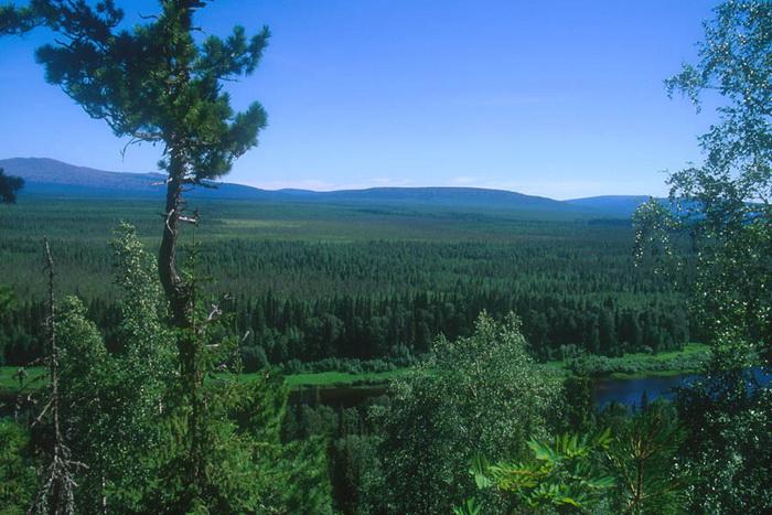Девственный лес Коми