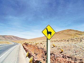 Осторожно, ламы! (Дорожный знак на подъезде к боливийскому городу Потоси)