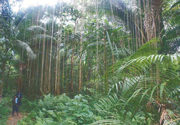 Новая Гвинея, джунгли Новой Гвинеи