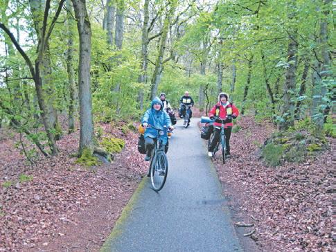 Голландия, велодорожка в лесу