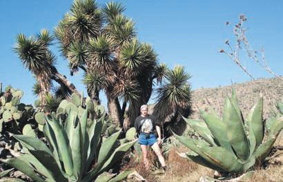 Дерево джошуа — эндемик, встречается только в северных и центральных районах Мексики и на юго-западе США