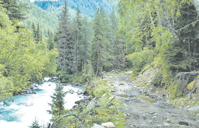 Кавказ, в ущелье реки Гондорай