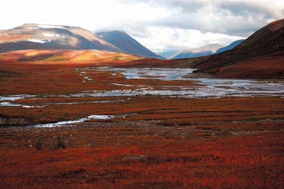 Тундра - фото тундры осенью на Ямале