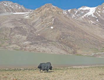 Таджикистан. Одинокий як у озера Лянгаркуталь, которое находится на высоте 4588 м от уровня моря!