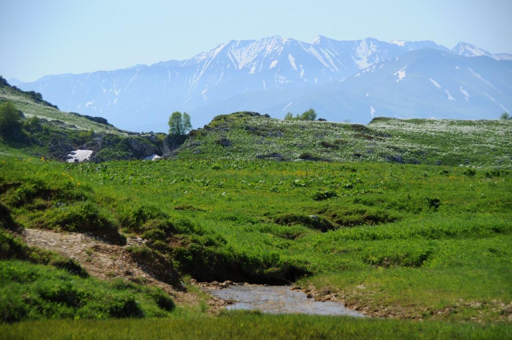 Картинки растительности краснодарского края