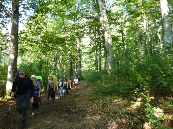 Рисунки поход в лес