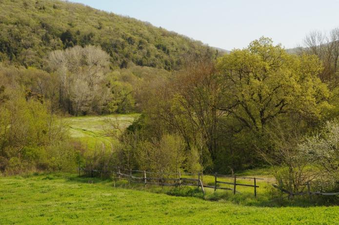Весенние краски фото от СВ-Астур. Красивые и яркие весенние краски природы и зелёной листвы в горах - фотография